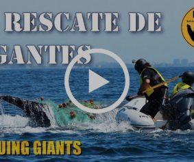 Al Rescate de Gigantes Video Raben Puerto Vallarta Ecobac